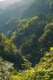 Foresta in alpi giapponesi sul tramonto con luce laterale Immagini Stock