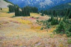 Foresta alpina Immagini Stock Libere da Diritti