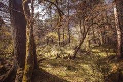 Foresta alpina Fotografia Stock Libera da Diritti