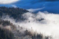 Foresta alpina conifera in nebbia densa di mattina Immagini Stock