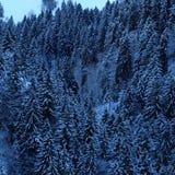 Foresta alpina del pino di Snowy fotografia stock