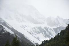 Foresta alpina dell'albero sulla montagna con le alpi più alte e catena montuosa più estesa in Samnaun Fotografie Stock