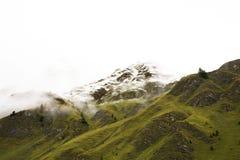 Foresta alpina dell'albero sulla montagna con le alpi più alte e catena montuosa più estesa in Samnaun Fotografie Stock Libere da Diritti