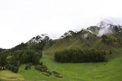 Foresta alpina dell'albero sulla montagna con le alpi più alte e catena montuosa più estesa in Samnaun Fotografia Stock Libera da Diritti