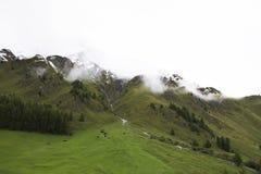 Foresta alpina dell'albero sulla montagna con le alpi più alte e catena montuosa più estesa in Samnaun Immagini Stock Libere da Diritti