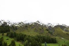 Foresta alpina dell'albero sulla montagna con le alpi più alte e catena montuosa più estesa in Samnaun Immagine Stock Libera da Diritti