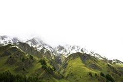 Foresta alpina dell'albero sulla montagna con le alpi più alte e catena montuosa più estesa in Samnaun un alto villaggio alpino Immagine Stock