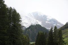 Foresta alpina dell'albero sulla montagna con le alpi più alte e catena montuosa più estesa in Samnaun un alto villaggio alpino Fotografie Stock Libere da Diritti