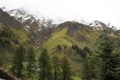 Foresta alpina dell'albero sulla montagna con le alpi più alte e catena montuosa più estesa in Samnaun un alto villaggio alpino Fotografia Stock Libera da Diritti