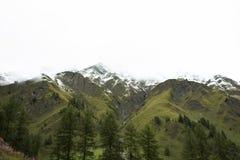 Foresta alpina dell'albero sulla montagna con le alpi più alte e catena montuosa più estesa in Samnaun un alto villaggio alpino Immagini Stock