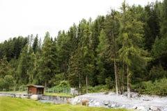 Foresta alpina dell'albero sulla montagna in Samnaun Immagine Stock Libera da Diritti