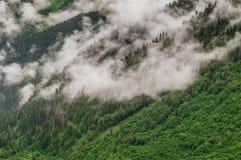 Foresta alta nelle montagne Fotografia Stock