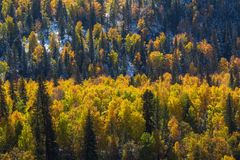 Foresta in Altay Mountains, Russia di autunno nave Fotografia Stock