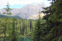 Foresta & montagna degli alberi di pino Fotografie Stock