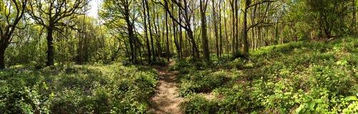 Foresta antica del prato fotografie stock libere da diritti