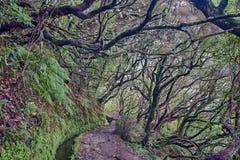 Foresta antica di laurelsilva a Caldeirao Verde Fotografia Stock Libera da Diritti