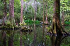 Foresta antica surreale Fotografie Stock