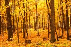 Foresta arancione fotografia stock