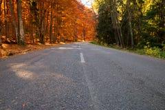 Foresta arancione e verde Fotografia Stock Libera da Diritti