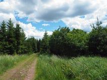 Foresta assortita del sentiero per pedoni in primavera fotografie stock
