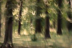 Foresta astratta Immagine Stock