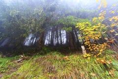 Foresta astratta fotografia stock libera da diritti