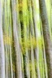 Foresta astratta Immagini Stock
