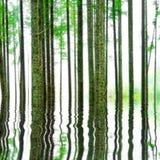 Foresta astratta con acqua Fotografia Stock