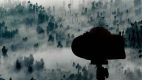 Foresta astratta della nebbia stock footage