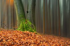 Foresta astratta nel tempo di autunno Fotografia Stock Libera da Diritti