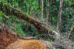 Foresta atlantica Fotografia Stock