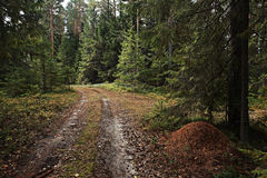 Foresta attillata immagini stock libere da diritti