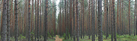Foresta attillata immagine stock