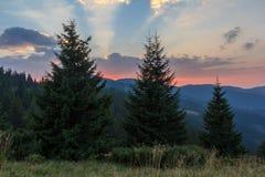 Foresta attillata carpatica al tramonto Immagine Stock