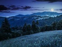 Foresta attillata da un lato della collina della montagna alla notte Fotografie Stock Libere da Diritti