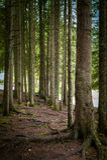 Foresta attillata dell'albero Fotografia Stock Libera da Diritti