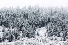 Foresta attillata dello Snowy Fotografia Stock Libera da Diritti
