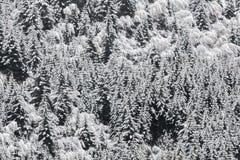 Foresta attillata dello Snowy Fotografia Stock