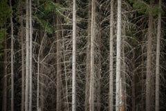 Foresta attillata densa fotografia stock libera da diritti
