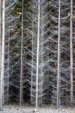Foresta attillata densa fotografia stock