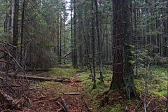 Foresta attillata di estate immagine stock libera da diritti