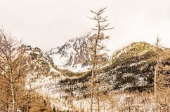 Foresta attillata dopo il disastro naturale in alto Tatras fotografie stock libere da diritti