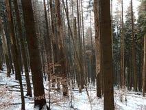 Foresta attillata morta nell'inverno Immagine Stock