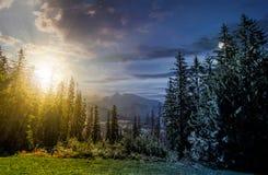 Foresta attillata nell'alto concetto di tempo di Tatras Immagini Stock Libere da Diritti