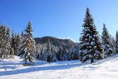 Foresta attillata nell'orario invernale Fotografia Stock