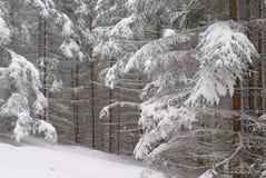 Foresta attillata spessa di inverno con i rami innevati Immagini Stock Libere da Diritti