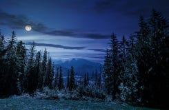 Foresta attillata su un prato in alto Tatras Fotografia Stock Libera da Diritti