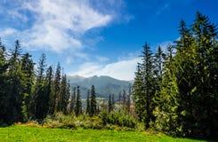 Foresta attillata su un prato in alto Tatras Fotografia Stock