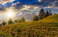 Foresta attillata sul pendio di collina erboso in tatras al tramonto Immagini Stock Libere da Diritti