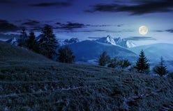 Foresta attillata sul pendio di collina erboso in tatras alla notte Fotografia Stock